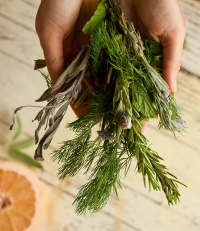 травы для очищения от паразитов