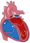Рыбий жир при патологии щитовидной железы
