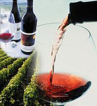 Итальянское вино: темперамент солнечной страны