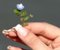 Как отбелить ногти - домашние или профессиональные средства?