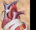 Брадикардия - признак тренированного сердца или заболевания?