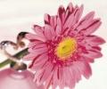 15 лучших цветочных ароматов для женщин