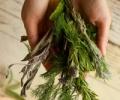 Травы для очищения организма: очистительная фитотерапия